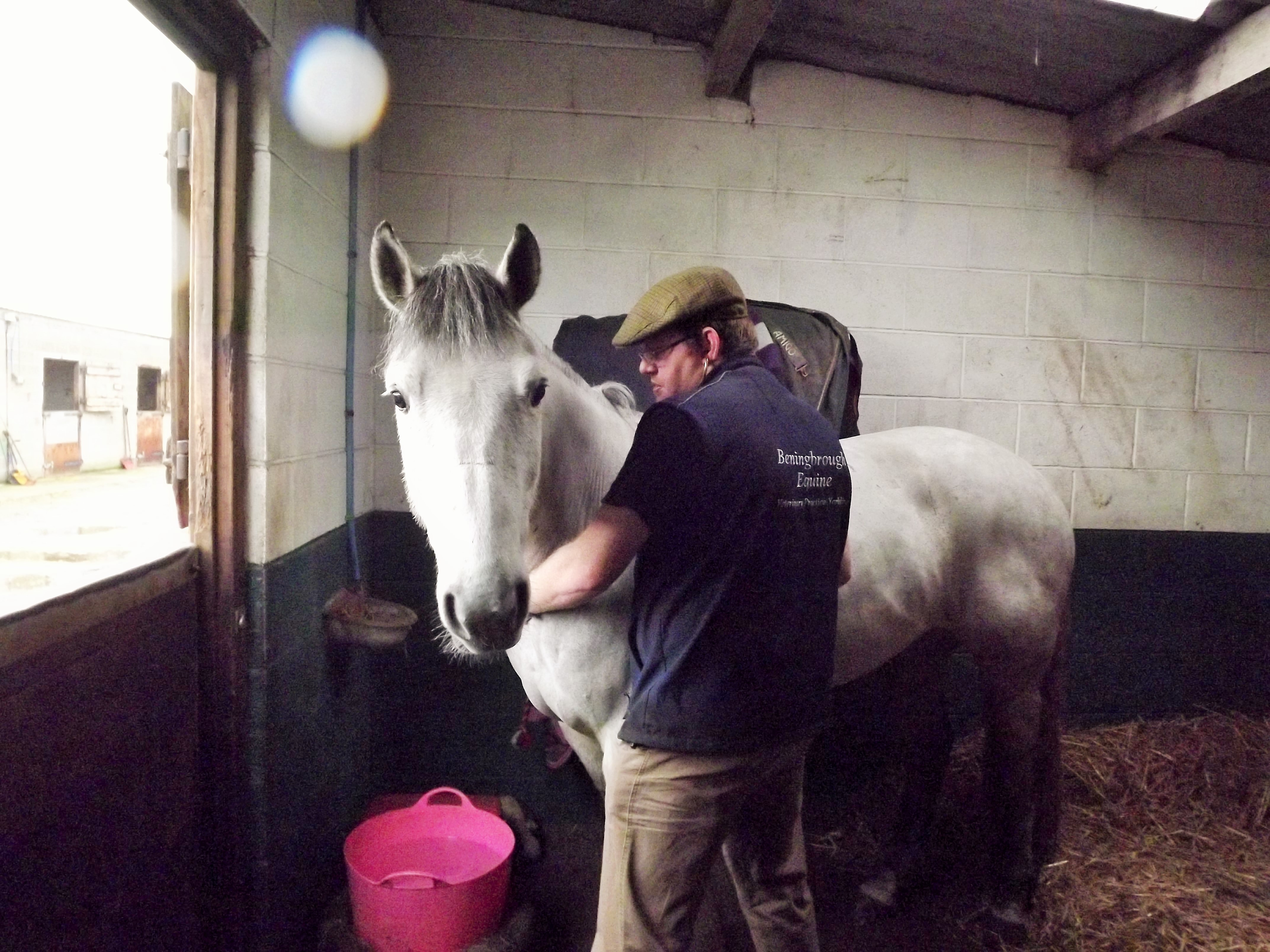Beningbrough Equine Veterinary Surgery